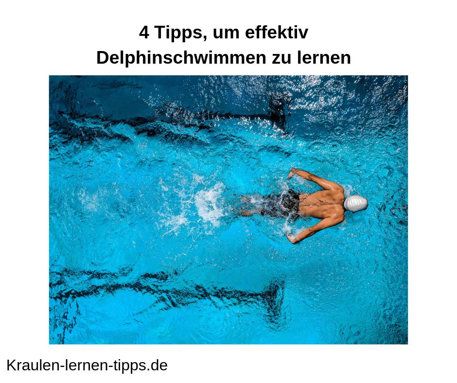 delphinschwimmen lernen